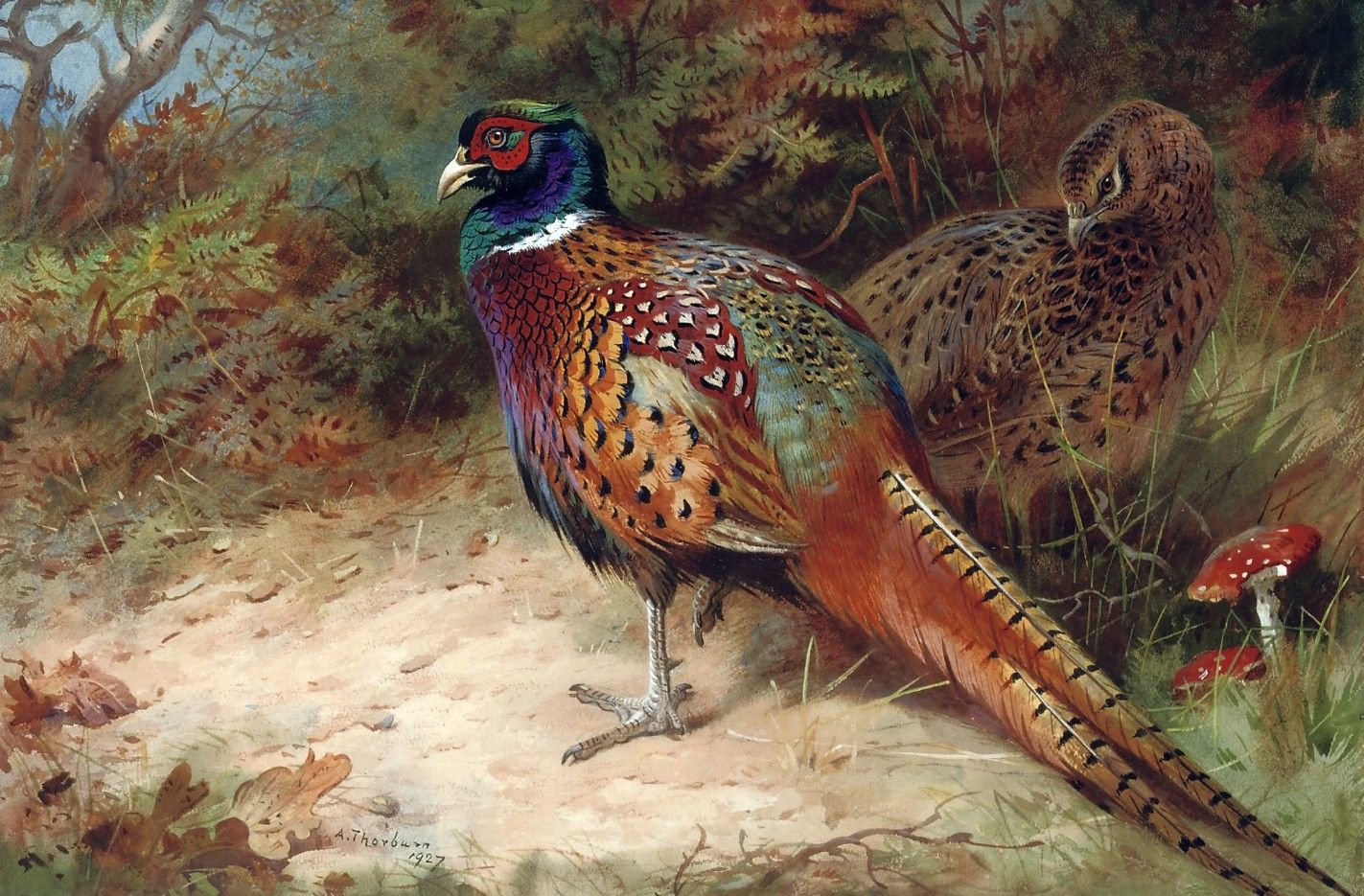 Cock and Hen Pheasant in the Undergrowth